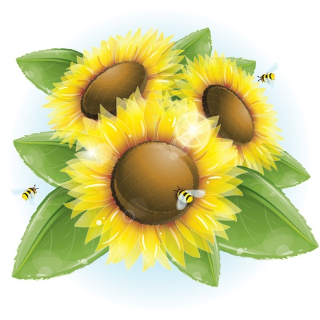 Beautiful sunflowers and green leaves Illustration