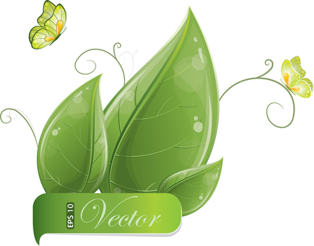 green butterfly: Green leaves design with butterfly isolated on white, vector illustration, eps-10