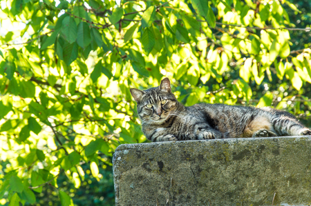 adult male: adult male cat in full relaxation in nature Archivio Fotografico