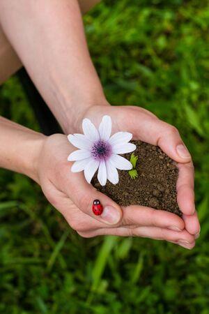 tending: hands tending a flower in the earth