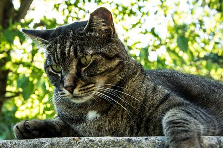 observing: cat observing nature in summer