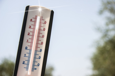 fever plant: thermometer pointing to the sky to symbolize the heat of summer