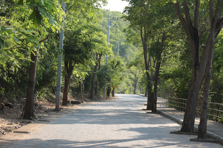 The quiet road to the jungle. 写真素材
