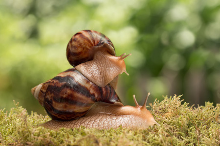big snail carries little snail and mantis