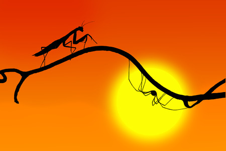 arachnida: the silhouettes of a graceful praying mantis and the spider on  fine twig on the backdrop of the setting sun Stock Photo