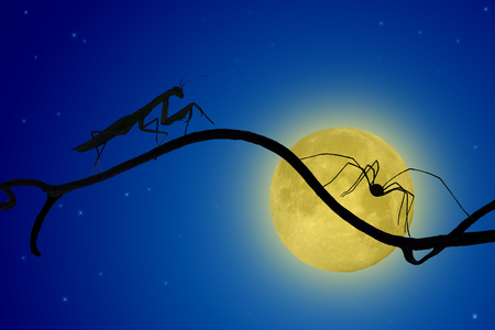insecurity: the silhouettes of the praying mantis and the spider on slender twig on the backdrop of the moon. spider runs away, mantis catching up