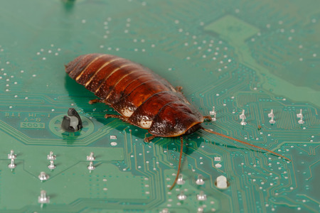 computer bug: cockroach on the  computer microcircuits. Concept of computer bug