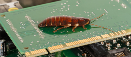 computer bug: cockroach on computer microcircuits. Concept of computer bug