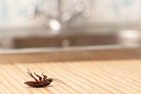 水道の蛇口の背景にマンションで死んでいるゴキブリは。内部の高層ビル。アパートでゴキブリと戦います。僕滅。