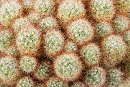 dewdrops: Closeup of a green brown prickly cactus with dewdrops Stock Photo