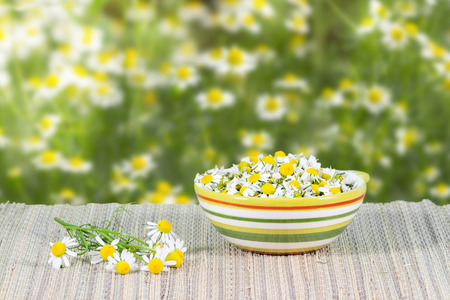assembled: assembled chamomile flowers in ceramic cup on a background of chamomile flowers at sunny day Stock Photo