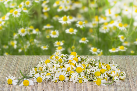 assembled: pile assembled chamomile flowers on table on a green leaves background at sunny day