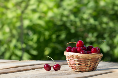 large and juicy ripe cherries in a basket on wooden board on a background of foliage at sunny day, fresh fruits