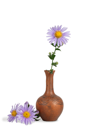 closeup flower of Michaelmas daisies (botanical name: Aster novi-belgii or Symphyotrichum novi-belgii), also known as New York asters, in the clay  pitcher isolated on white Stock Photo
