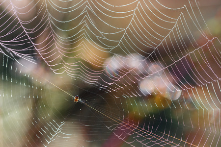 autumn spider web with colorful  brightness background  before sunset. small DoF focus put only to spider.