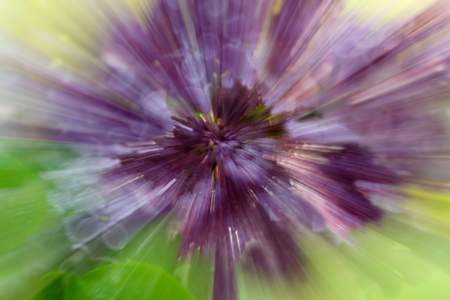 Dramatic explosion blur of lilac flower with  zooming effect Stock Photo