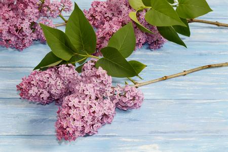 Zweige der lila Blumen auf blauem Holzbrett