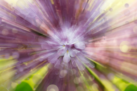 Abstract radial blur with  zooming effect of lilac flowers  for themes of uniqueness, floriculture, individuality or state of mind Standard-Bild