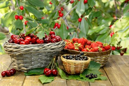 Sommer-Geschenke: Süßkirsche, Erdbeere und schwarze Johannisbeere in Weidenkörbe auf hölzernen Schreibtisch auf Hintergrund der Zweige des Kirschbaums mit reifen roten Beeren