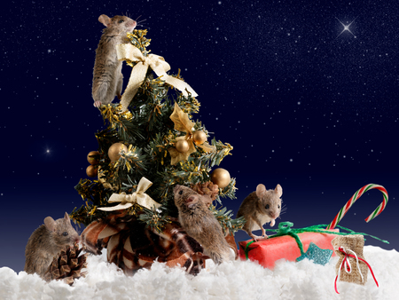 Christmas card: four mouse decorates the Christmas tree by night on background starry sky Standard-Bild - 92092499
