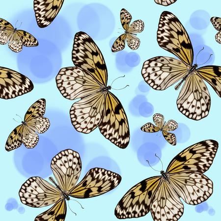 Seamless pattern of tropical butterflies Idea Leuconoe on blue background with circles Standard-Bild