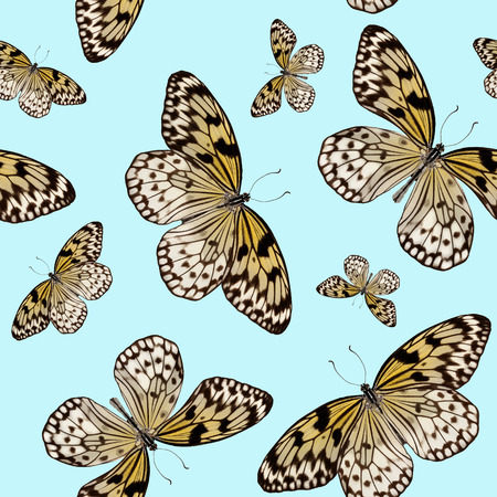 Seamless pattern of tropical butterflies Idea Leuconoe isolated on blue background