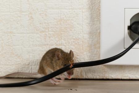 Closeup fil cassé sur le fond de la souris près du mur à l'intérieur des immeubles de grande hauteur. Combattez avec des souris dans l'appartement. Extermination. Petite mise au point DOF mise uniquement sur le fil. Banque d'images - 100661757