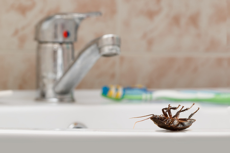 Dead cockroach on the sink on the background of the water faucet, toothbrush and brown tile in the bathroom. Inside buildings. Fight with cockroaches in the apartment. Extermination.