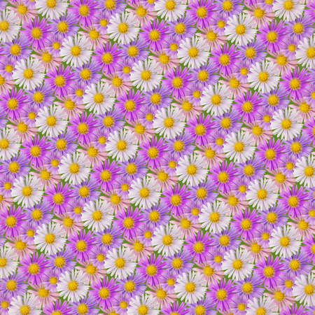 Abstract background of pink, violet and white aster flowers on green. Seamless pattern. Imagens