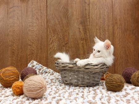 White fluffy kitten sitting into a basket near balls of yarn in the interior 免版税图像