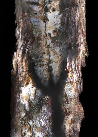 fracas: Solitay old tree Stock Photo
