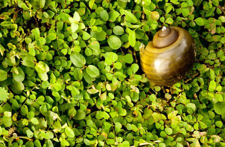 snail shell in the field Stock Photo