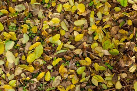 Fallen tropical tree leaf