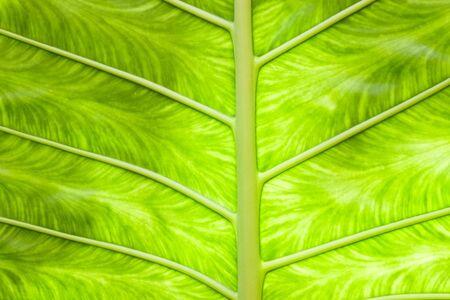 greenery leaf2
