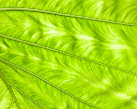 Greenery leaf1