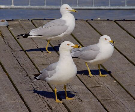 freezed: Three gulls are waiting