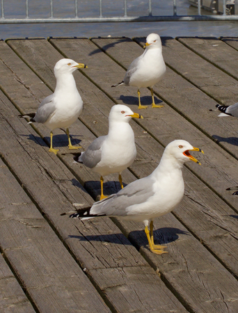 reaction: Four gulls different reaction