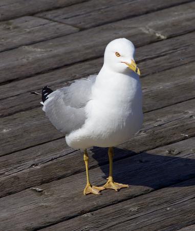 solely: Solely gull