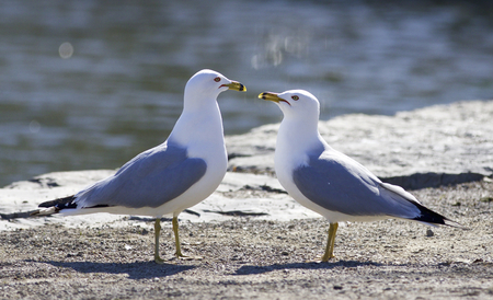 funny picture: Funny picture with the gulls in love