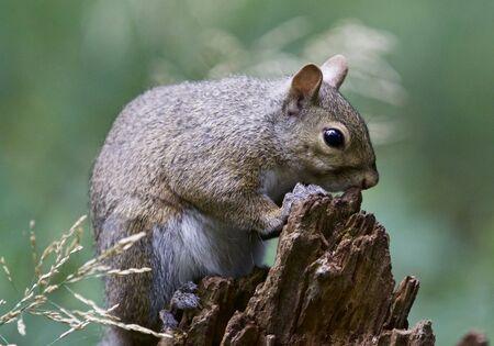 Schönes Bild mit einem niedlichen lustigen Eichhörnchen
