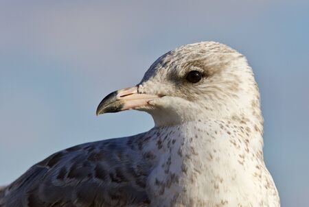 Amazing isolated photo of a cute gull