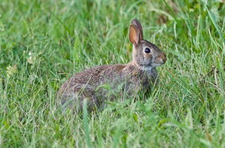 Background with a cute rabbit sitting in the grass Stock Photo
