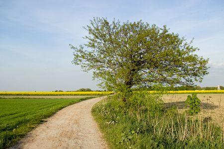 Alone tree photo