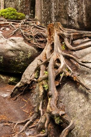 root Stock Photo