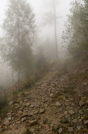 the mountain forest path in a fog Stock Photo