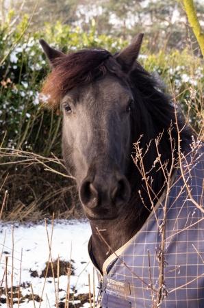 miry: horse
