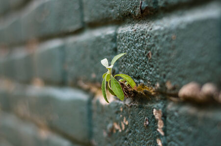 small little plant, growing on the grout between bricks Stock Photo