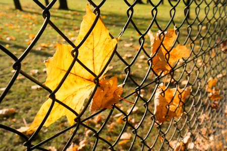 leafs at wired fence, autumn seson
