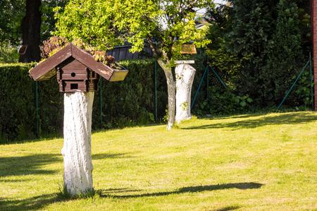 the feeder at garden. A summer time