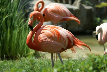 Pink Flamingo photo